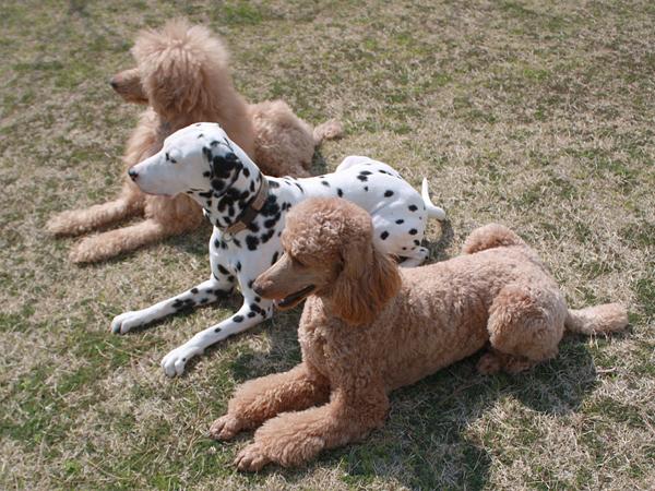 愛犬も安心
