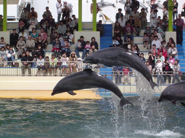 【観光】越前松島水族館<イメージ>