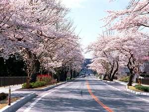 桜咲く平泉へどうぞ