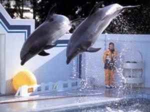 徒歩8分のしながわ水族館 イルカ・アシカショーあります!