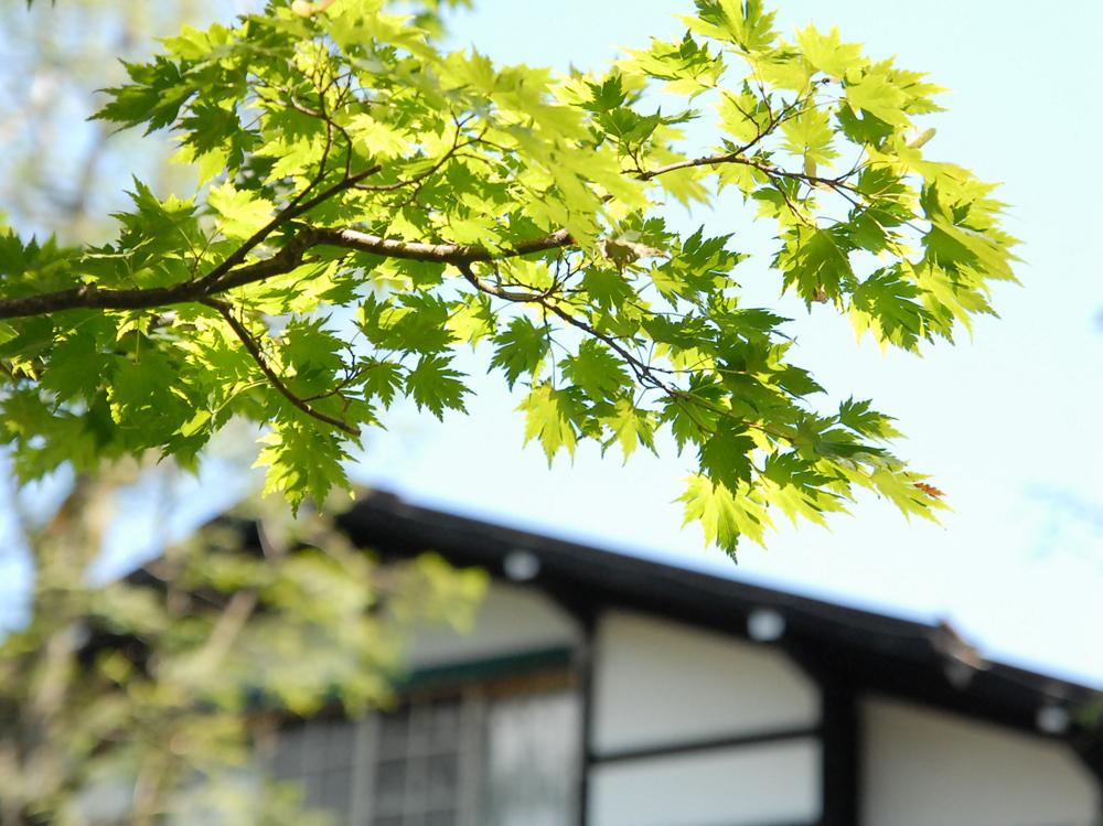 緑溢れる夏の軽井沢