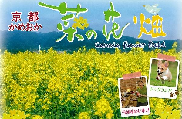 京都かめおか菜の花畑イメージ