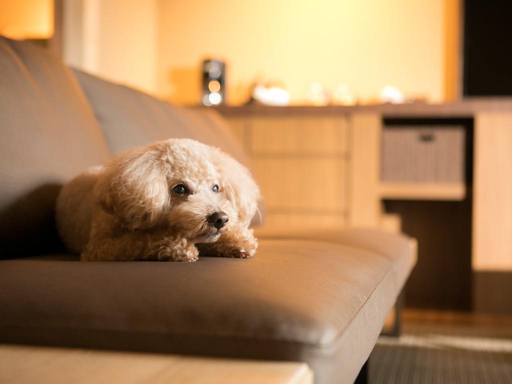 大切な愛犬と共に過ごすホテルステイ(イメージ)